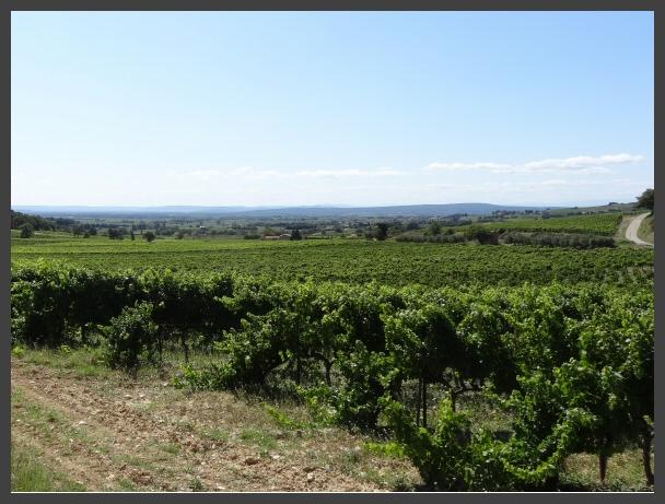 Prachtig vergezicht over de wijngaarden vanuit Les Comtadines