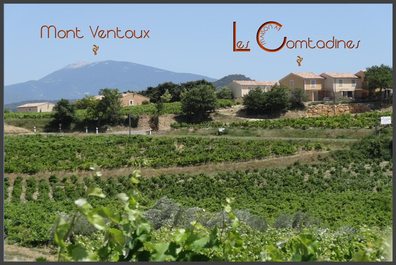 Les Comtadines - Maison A1 kijkt uit over de wijngaarden van Rasteau, met de Mont Ventoux op de achtergrond.